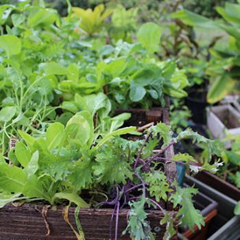News: Coronavirus Pandemic Inspires Home Gardening